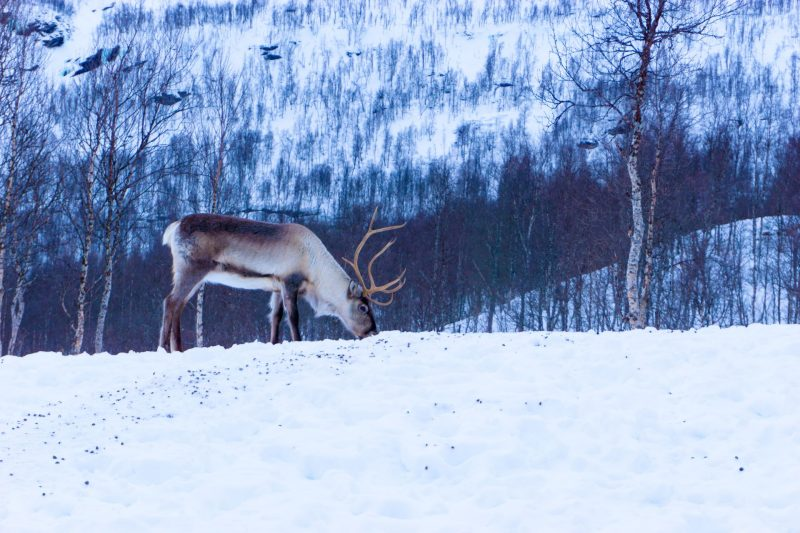 Guidad hand i det norrländska köket