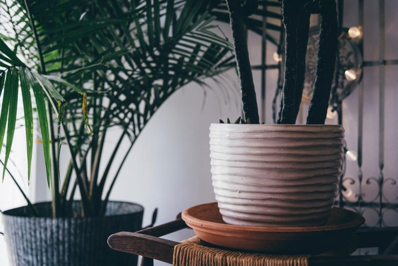 Renare luft med växter